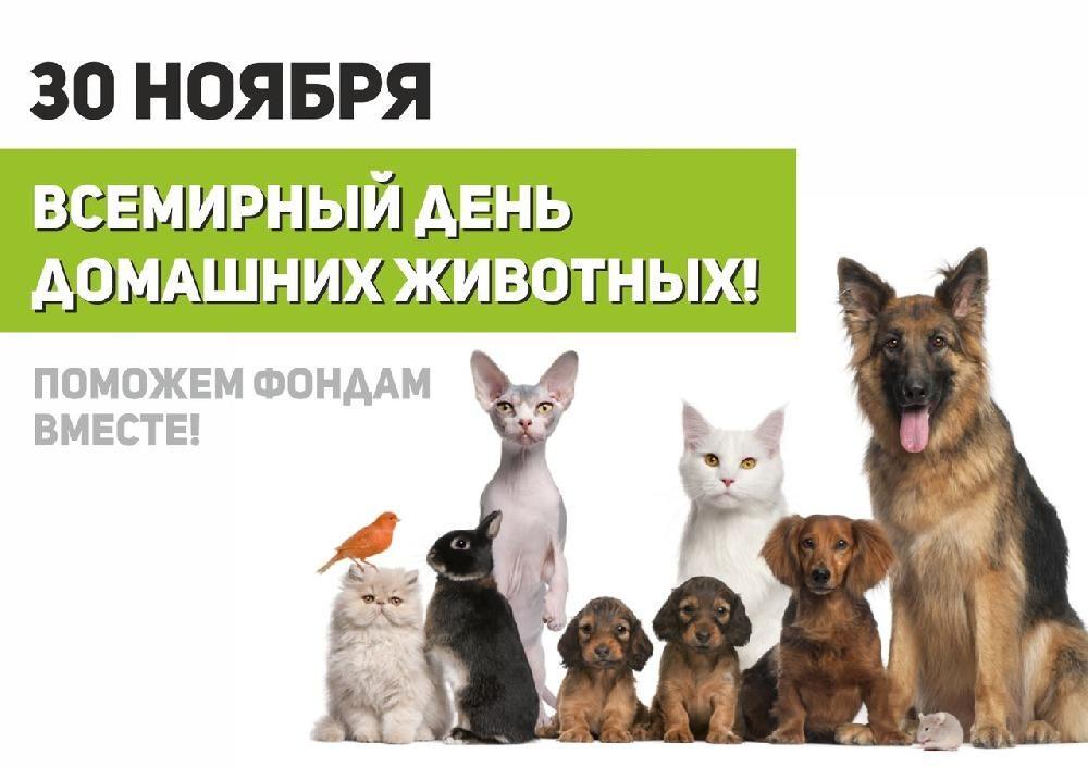 всемирный день домашних животных картинки вечерние платья интернет